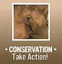 Visit the Institute for Conservation Research Website