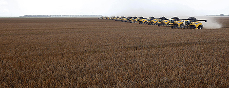 Workers harvest soy in a farm during a demonstration of harvest machines in Correntina, Bahia March 31, 2010. Brazil's 2009/10 soybean production is estimated to be 67.5 million tonnes. REUTERS/Paulo Whitaker.